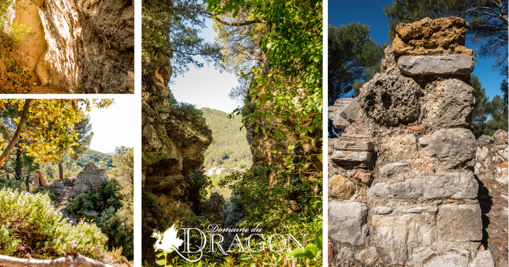 6-domaine.viticole.draguignan