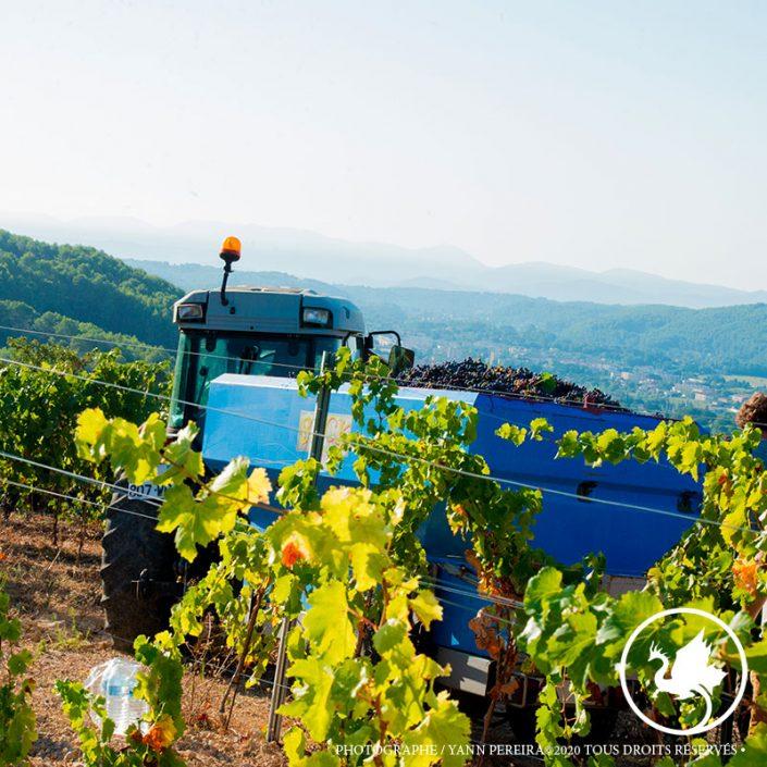 vignoble.vendanges.vignoble.provence.draguignan.var.83.photographe.reportage.viticole